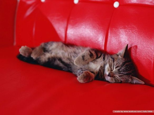[wallcoo_com]_baby_pussy_cat_wallpaper_Vol_124_FC136